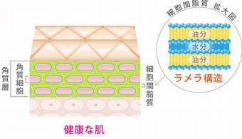 細胞間脂質